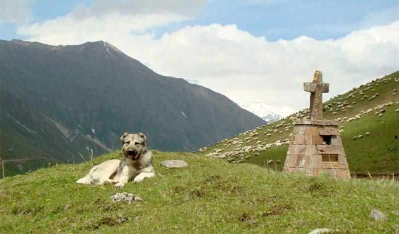 горный тур грузия