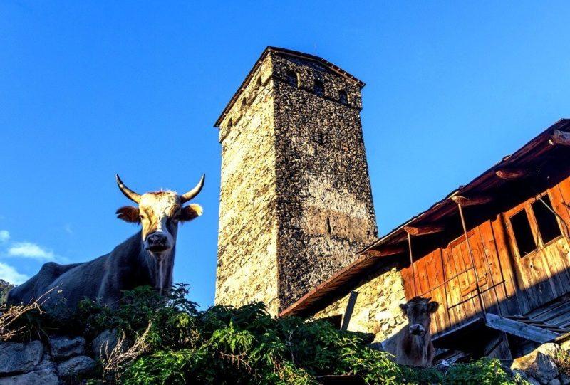 где найти сванскую башню